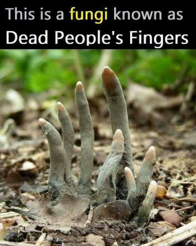 Dead peoples fingers